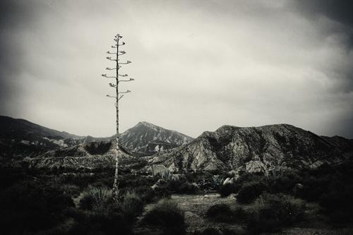 pita en el desierto