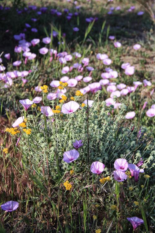 florecillas del campo campestre