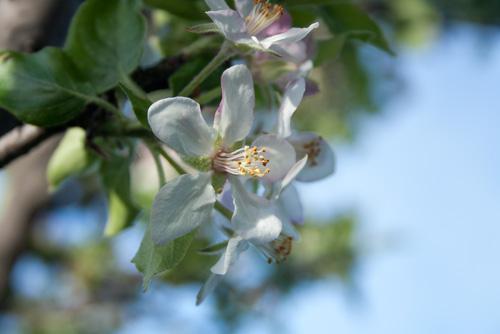 primavera-en-la-alpujarra