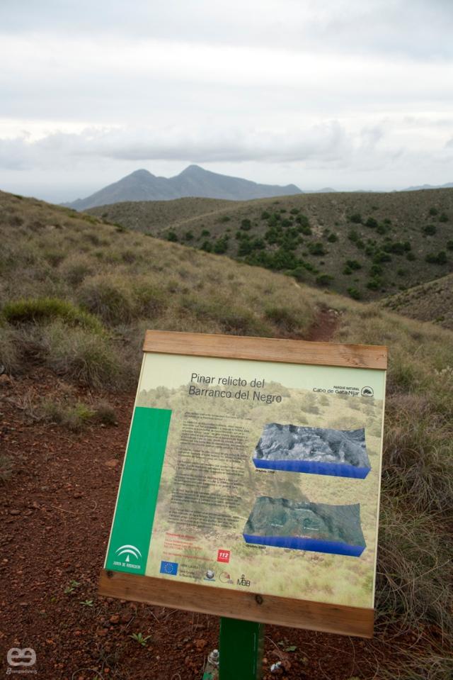 Pinar-del-Barranco-del-Negro