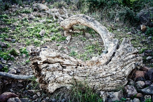 arbol-cadaver
