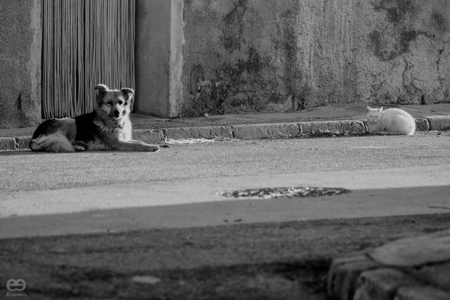 como-el-perro-y-el-gato