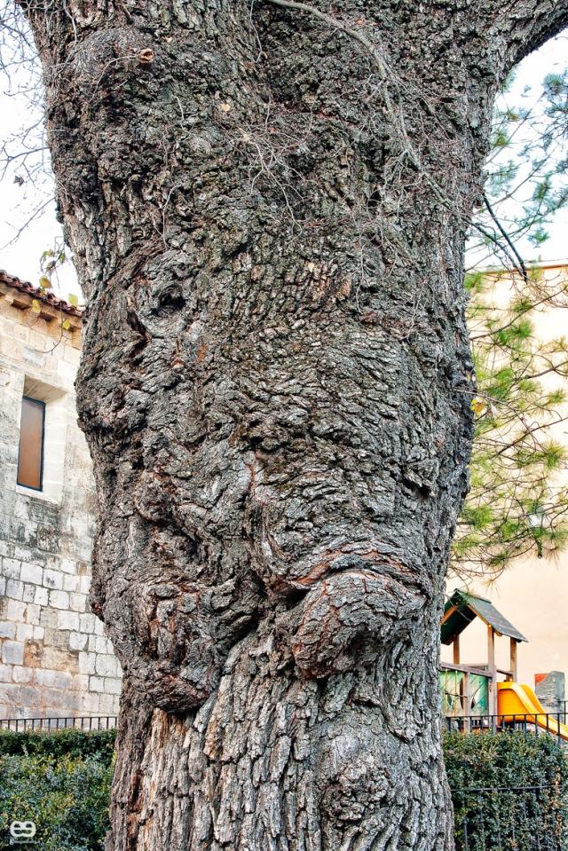 el-rostro-del-árbol-de-Beteta