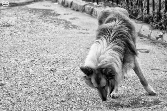 Lassie en Carrascosa