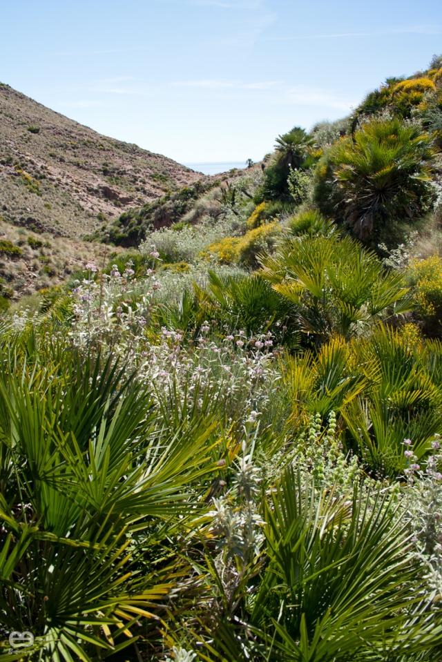 jungla-de-palmitos