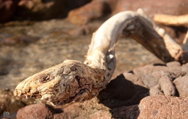 serpiente-marina-xiloficada-2