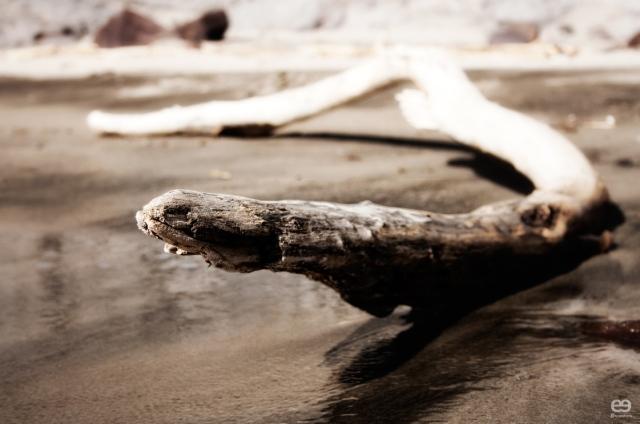 serpiente-marina-xiloficada-4