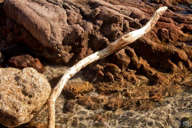 serpiente-marina-xiloficada