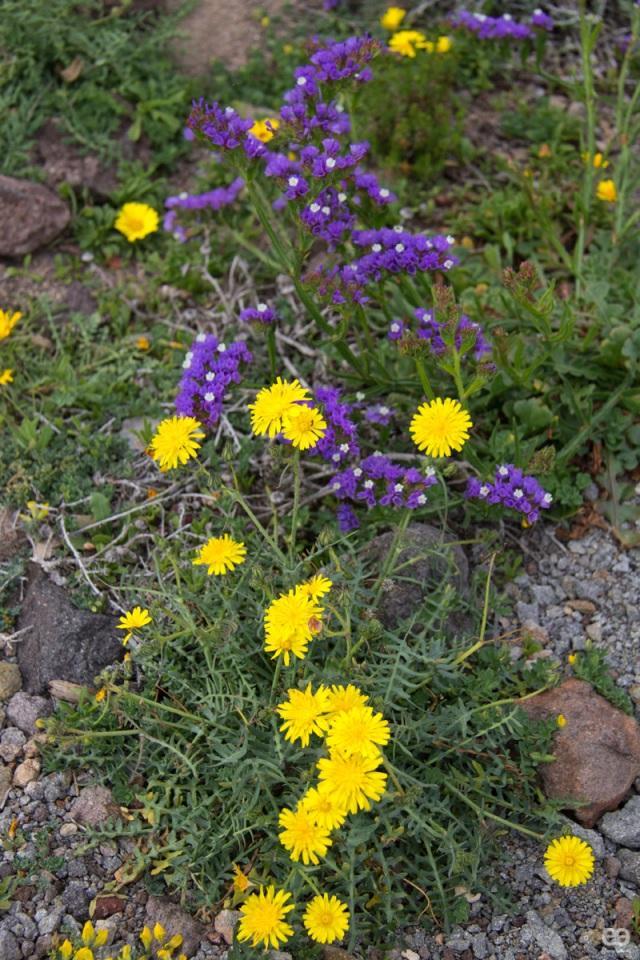 rastros-de-primavera