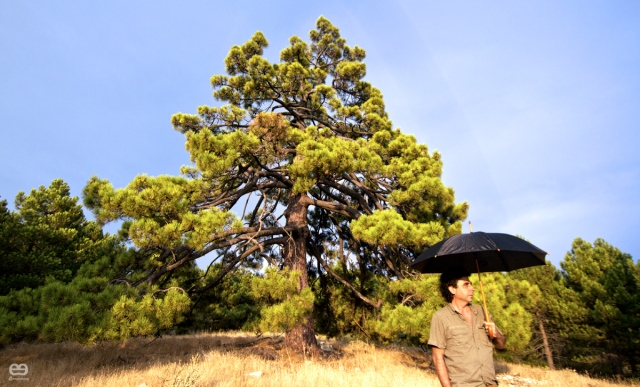 and-english-man-in-the-Sestero-pine